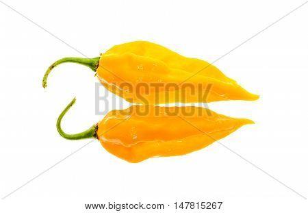 Two Ripe Fresh Fatalii Yellow Chili Hot Pepper