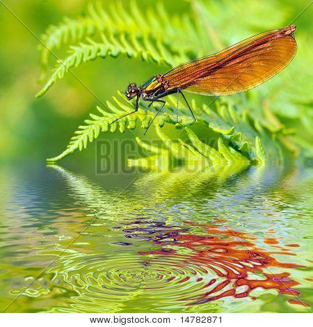 Macro damselfly on fern above water