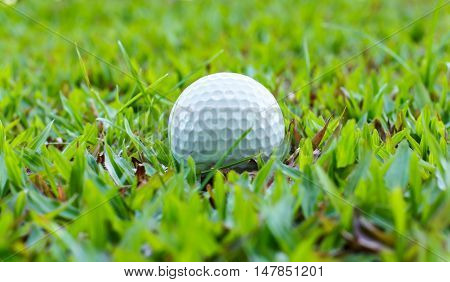 The golf-ball on course, Worl's most Popular sports