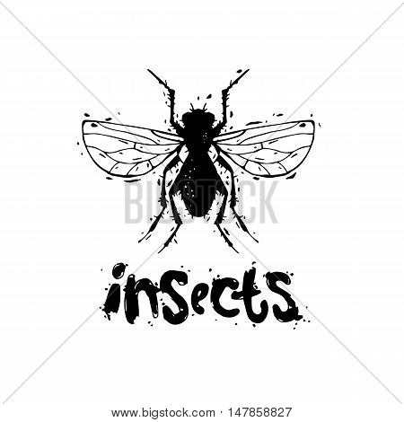 Insects, flies, unsanitary. Hand draw. Black on white, lettering. Flat design vector illustration.