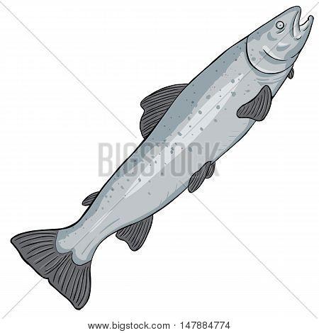Vector Cartoon Sea Trout