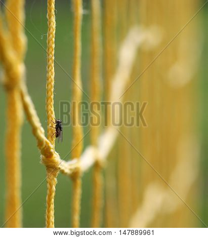 picture of a Fly on a Yellow Soccer Football Goal .