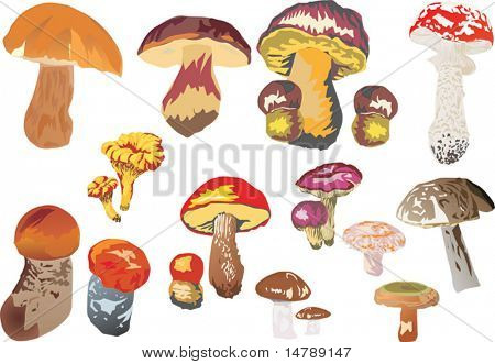 illustration with different mushrooms isolated on white background