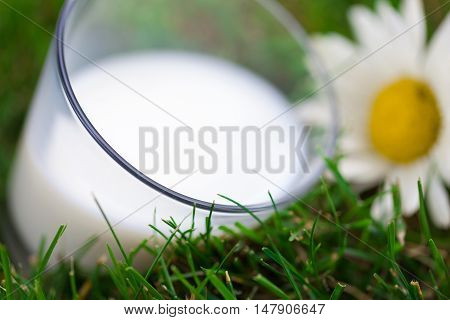 Glass of Milk with Daisy on Grass