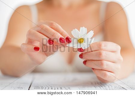 The Girl Tears Off The Petals Of Daisy.