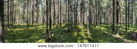 Panorama of green summer forest full of shadows