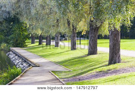 Timber walkway and trees alley in summer