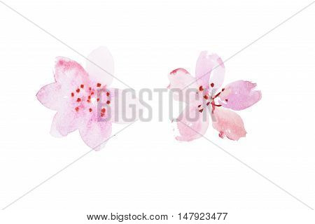 watercolor drawing of pink garden flowers, summer meadow bouquet aquarelle painting.