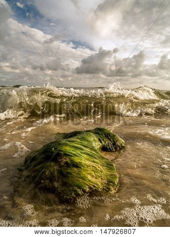 Algae covered rock being washed by sea waves