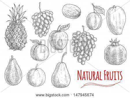 Natural fruits icon with sketched apple, orange, grape, pineapple, plum, pear, mango, kiwi and pomegranate fruits. Vegetarian dessert, juice or cocktail menu design