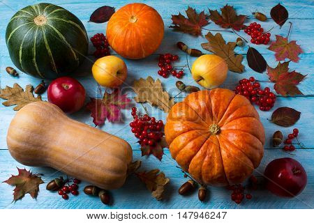 Autumn seasonal vegetables and fruits on the blue wooden background. Thanksgiving background with pumpkins berries and apples.