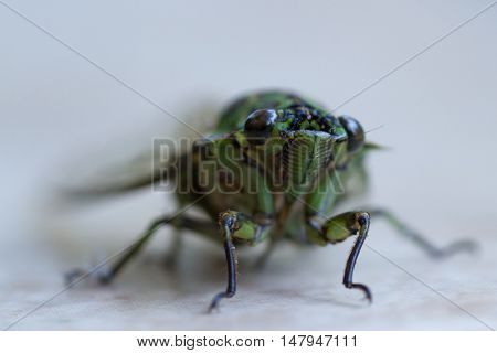 Large Rainforest Insect