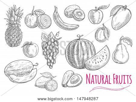 Fruits isolated sketches with sweet orange, banana, apple, lemon, grape, peach, plum, pineapple, mango watermelon avocado melon and pear fruits Food design