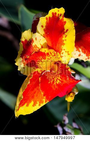 Orange Gladiolus Tropical Flowers