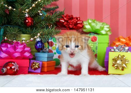 Orange and white ginger kitten standing next to a christmas tree with presents and ornaments on a red and white fur carpet red striped background with copy space