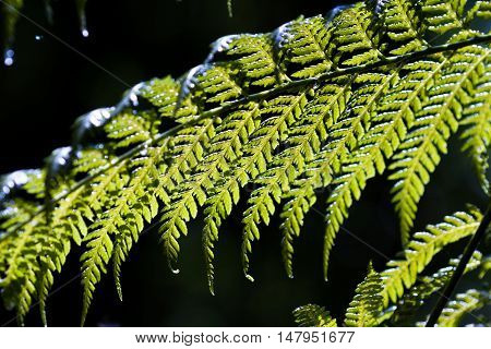 Beautiful Fern Background