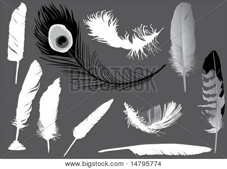 illustration with ten feathers isolated on grey background