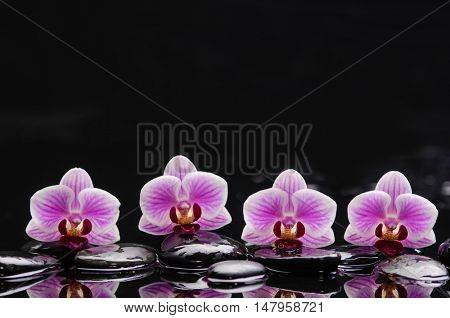 still life with four orchid and black stones