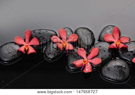 Red four orchid on wet black stones