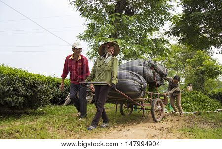 Phu Tho, Vietnam - Sep 16, 2016: Asian tea farmers laugh happily while carrying packages of tea from the hill to the tea factory. Female labor work hard as male one to earn a living in the country.