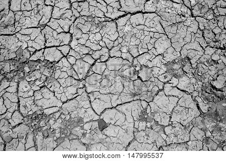 dry ground texture frome above nature background .