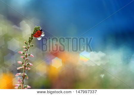 Small ladybug standing on a colored background with stars with a supply of water