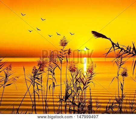 orange sunset sea
