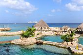 Dolphinarium in Cozumel Mexico with cruise ship in background poster