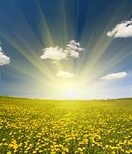 landscape with dandelion field under sky with large clouds poster