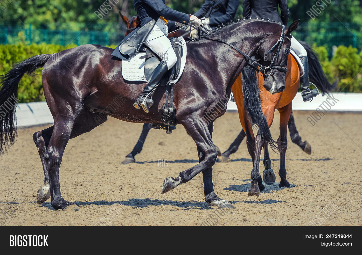 Black Horse Rider Image Photo Free Trial Bigstock