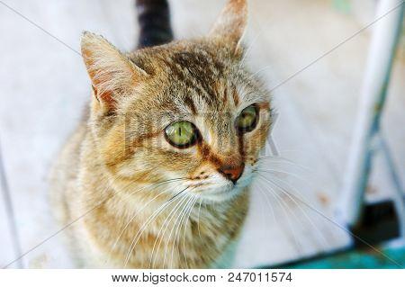 Tabby Cat Cat Head Looking Big Cat's Eyes Young Cat