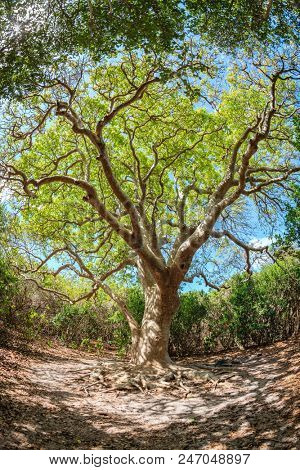 Beautiful old tree on a small island in BVI