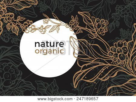 Vector Graphic Coffee Tree Plantation, Branch, Leaf, Bean. Vintage Hand Drawn Template, Tropic Backg