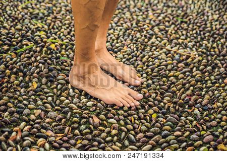 Man Walking On A Textured Cobble Pavement, Reflexology. Pebble stones on the pavement for foot reflexology. poster