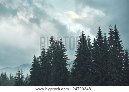 Magic Misty Forest In The Morning. Summer Landscape In The Mountains. Early Morning. Carpathian Moun