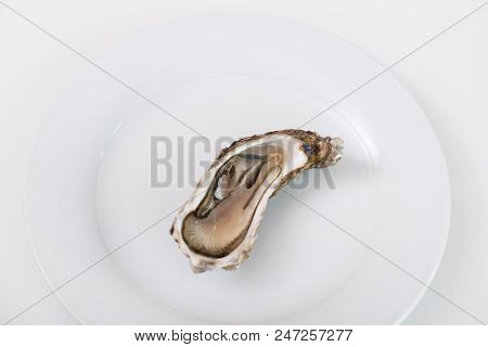 Fresh oyster. Raw fresh oyster is on white round plate, image isolated, with soft focus. Restaurant delicacy. Saltwater oyster. poster