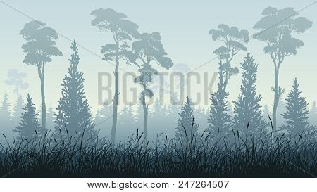 Horizontal Illustration Of Green Blue Misty Coniferous Forest (spruce, Pine, Cedar) With Grass.
