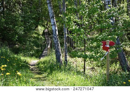 Beautiful Footpath Into A Green Forest At The Swedish Island Oland