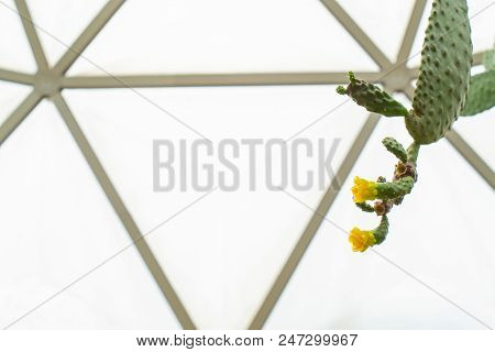 Close Up Selective Focus Of Flower On Green  Cactus In The Geodesic Dome Glasshouse, Nature Abstract