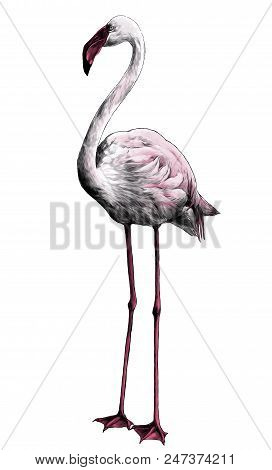 Flamingo Bird Stands Full-length