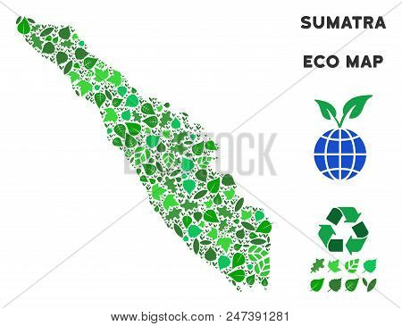 Ecology Sumatra Island Map Composition Of Herbal Leaves In Green Color Tinges. Ecological Environmen
