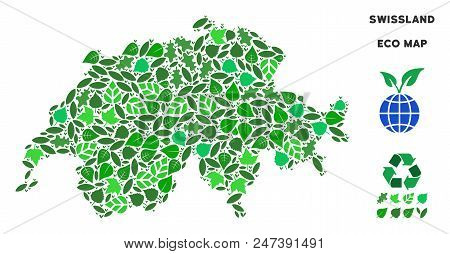 Ecology Swissland Map Composition Of Floral Leaves In Green Color Shades. Ecological Environment Vec