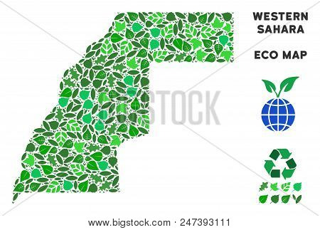 Ecology Western Sahara Map Collage Of Floral Leaves In Green Color Tinges. Ecological Environment Ve