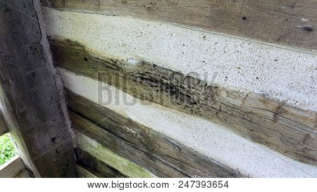Close-up Of Decayed Hand Hewed Log Set In Cabin Wall