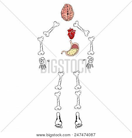 Abstract skeleton man vector photo free trial bigstock abstract skeleton of a man with internal organs vector illustration of human bones brain ccuart Images