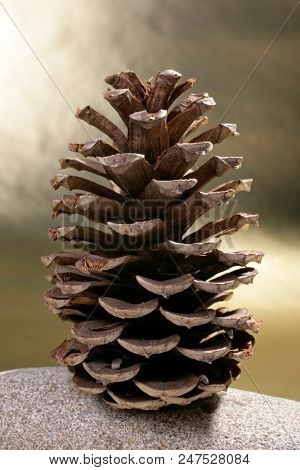 an image of a pine cone