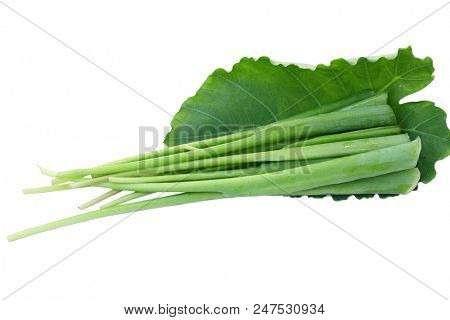 Giant strain stem leaf isolated on white background