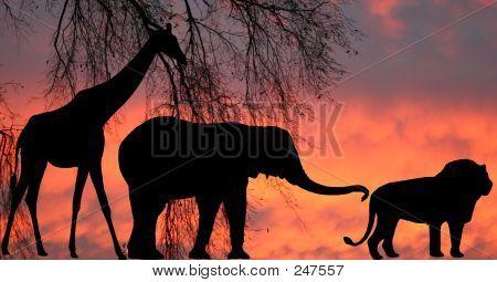 Jungle At Sunrise