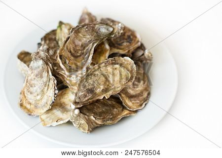 Fresh oysters. Raw fresh oysters on white round plate, image isolated, with soft focus. Restaurant delicacy. Saltwater oysters.
