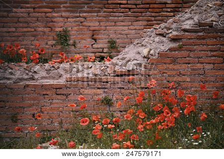 Rome Forum with ruins of historical buildings in flower field. Italy.